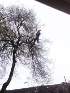 tree-pruning-arborist